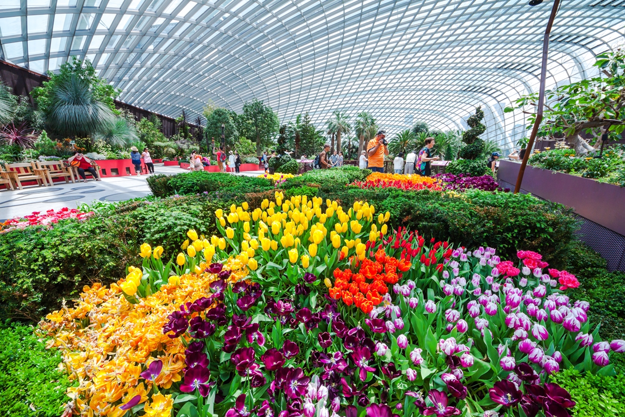 Flower Dome (3)